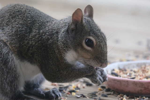 Squirrely Encounter