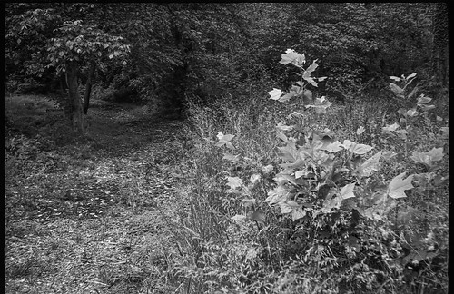 pathway entrance communityparkatcraggypark asheville northcarolina argusautronic35 eastmandoublex200 hc110developer blackandwhite monochrome monochromatic landscape 35mm 35mmfilm film analog rangefinder
