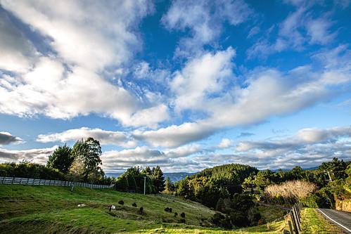 newzealand upperhutt moonshine hilltop moonridge lane narrow autumn monring sunrise clouds sky cumulus sheep cattle farm rural livestock