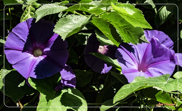 IMG_2218_Flowers