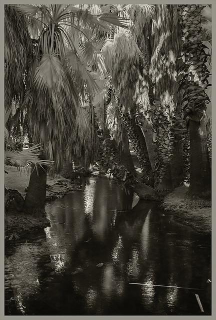 Agua Caliente IR #6 2020; Spring Run & Palms