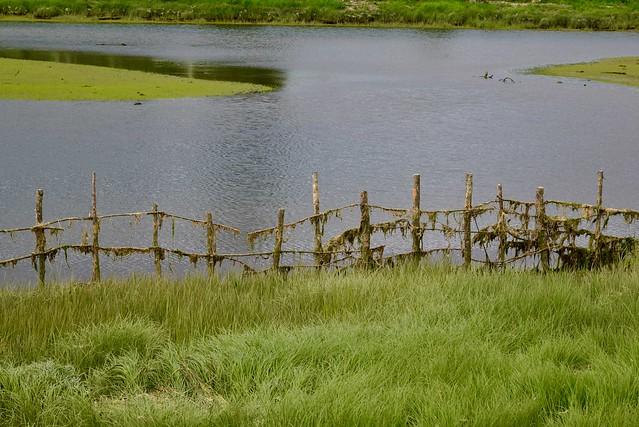 Mossy fence ~ HFF
