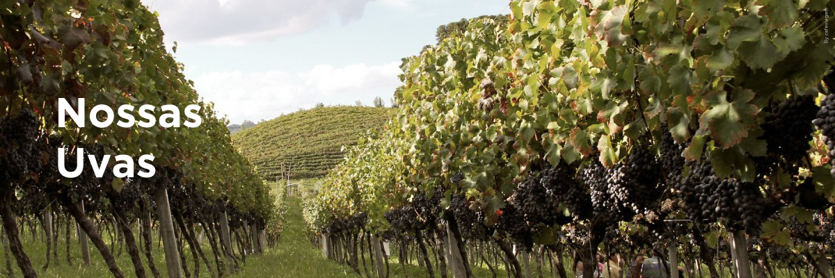 Uvas produzida no Brasil
