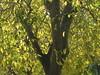 An Array of Autumn Gold - Northcote