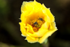Two bees hangin out