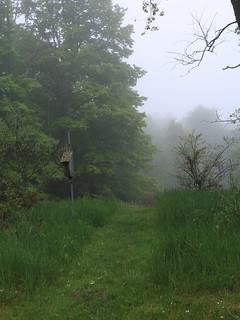 Misty day out back