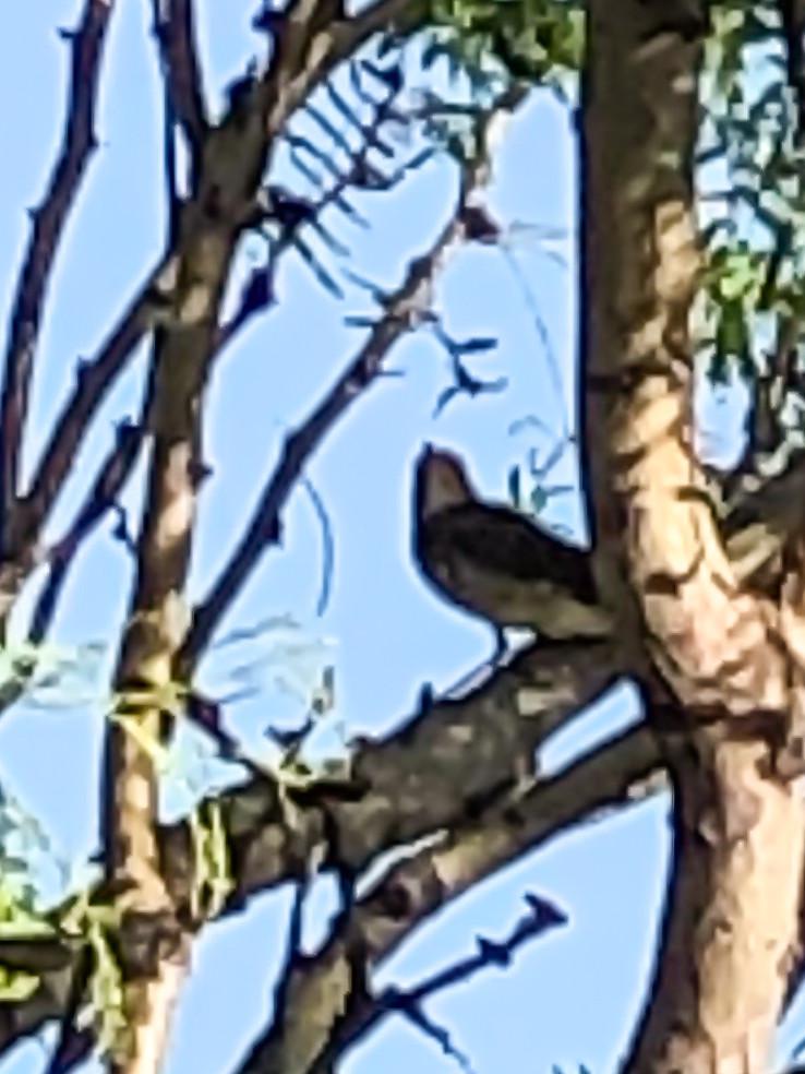 Unknown Bird (2 of 2)