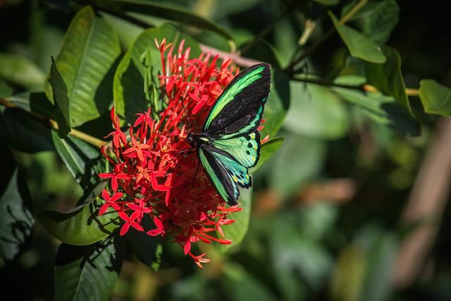 Tropical Botanic Garden, Coral Gables, Florida, USA