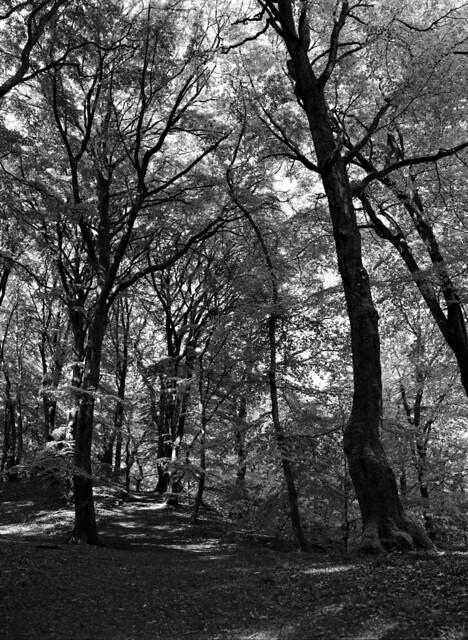Parti fra Troldeskoven