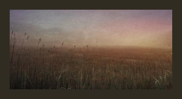 Wetlands in Early Light