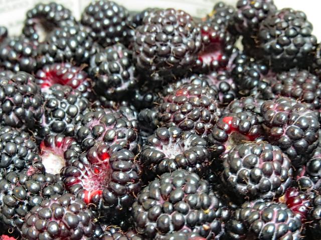 Fresh Picked Berries.