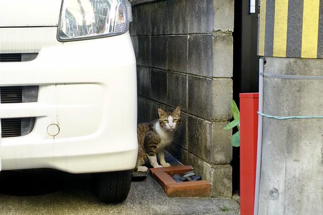 Today's Cat@2020ー05ー29