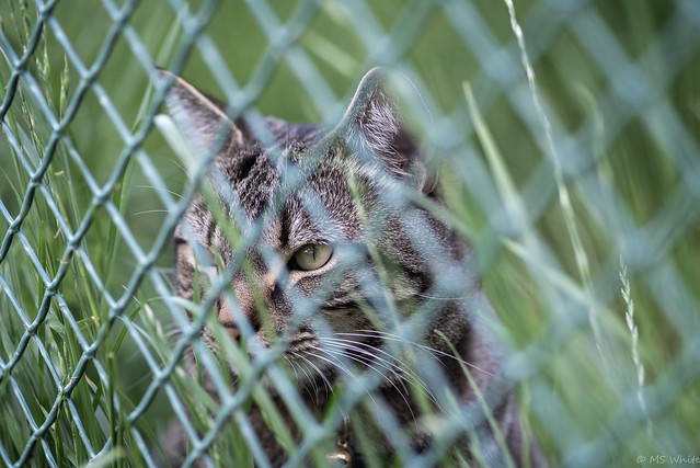 Backyard tales...behind the fence.