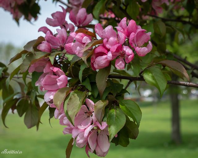 The splendor of spring (Explore)