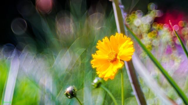 Flower - 8493