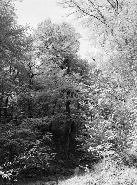 I kanten af Troldeskoven
