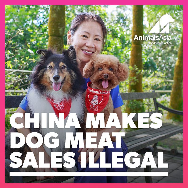 Dog meat trade ban 3 v2
