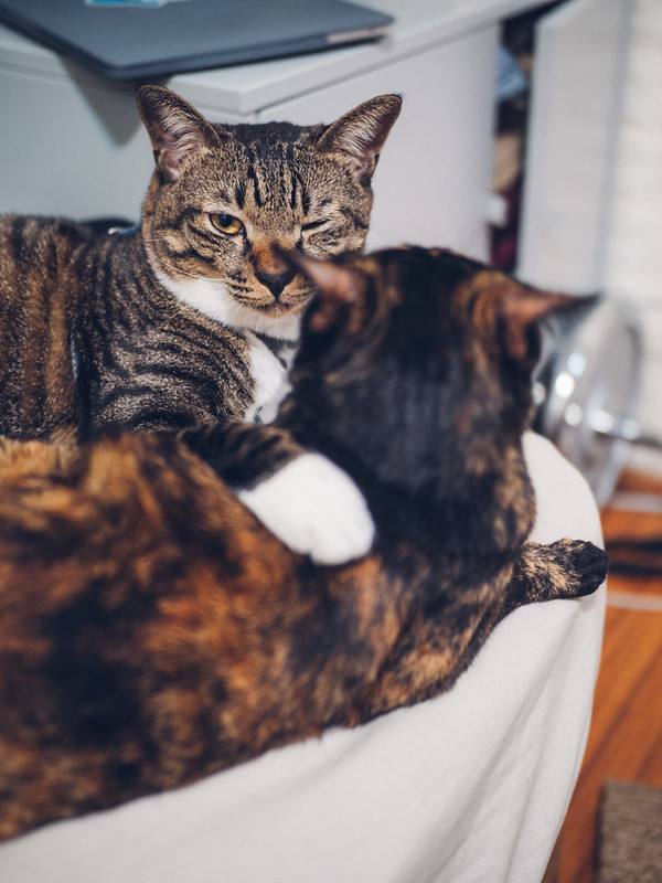我家喵喵 Cats