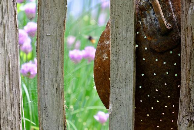 Garden Life Wabi-Sabi