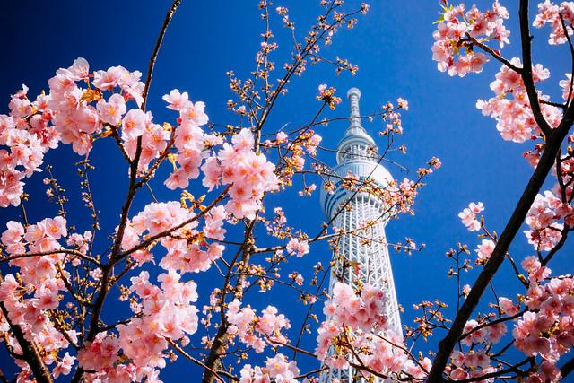 Tokyo Skytree_11