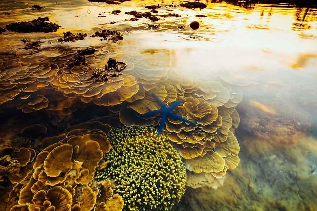 Phượt Hot - Bí Kiếp Phượt Phú Yên Toàn Tập – Xứ Nẫu Yêu Thương với Hoa Vàng Cỏ Xanh (65)