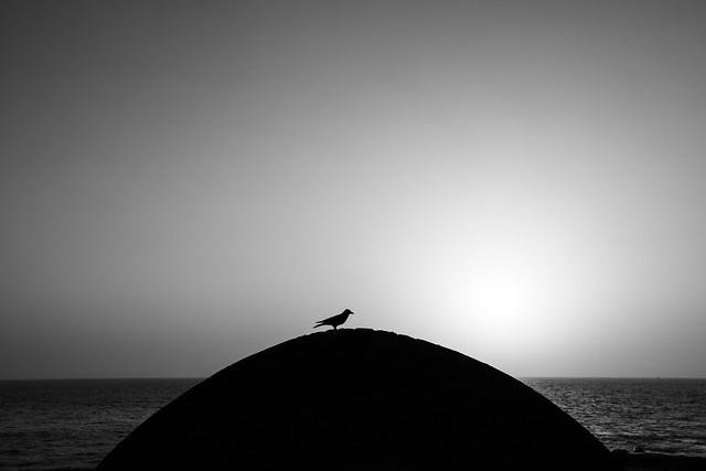Down by the Sea, Blanco y Negro