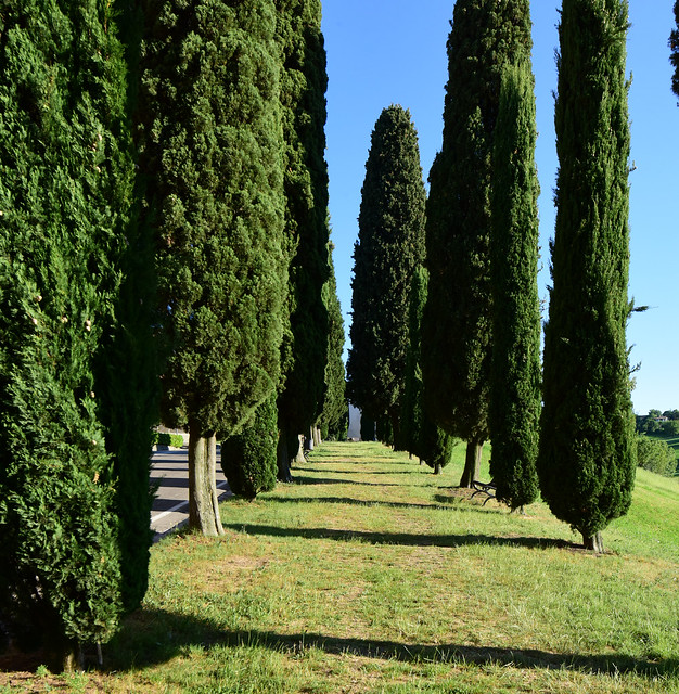 Levizzano Rangone (Castelvetro), Italy, Italy, May 2020 058