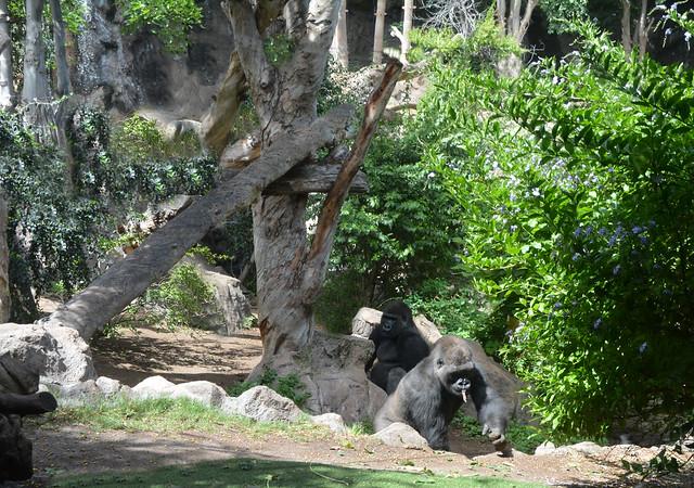Gorilas hermanos