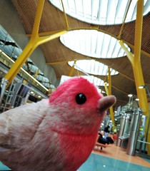 Finchito Bird en Barajas :-)