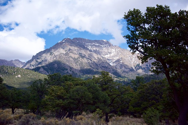 Pinion Grove Below Kit Carson Peak