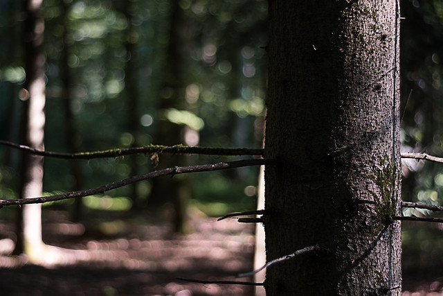 Tree @ f 2