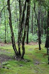 Lumber River State Park 1