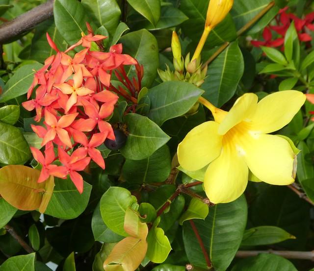 Road Town, Tortola - Flowers