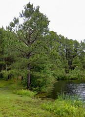 Upchurch Lake 1