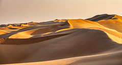 Curves of Sand - Oman 80