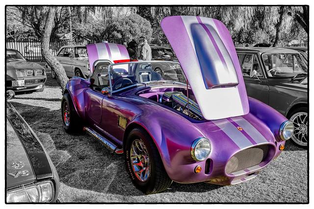 Purple Cobra