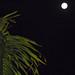 Full Moon. April 2020