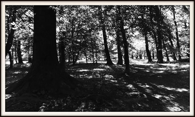Drzewa i cienie.