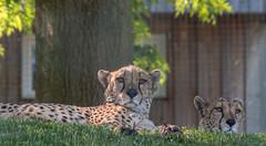 Euregio Zoo Aachen
