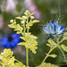 Blue Nigella damascena & Friends, 5.20.20