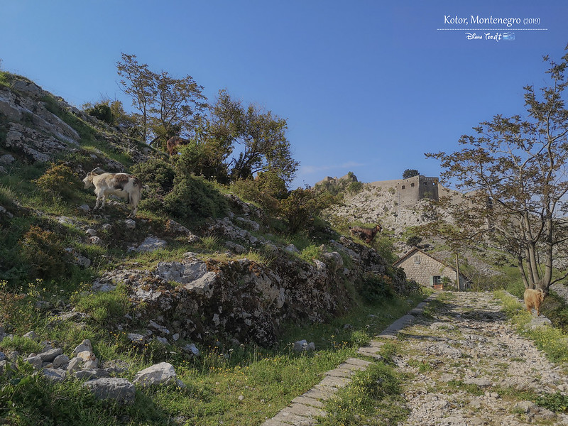 2019 Montenegro Kotor San Giovanni Fort 03