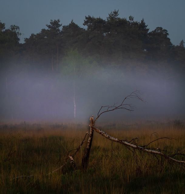 Early morning on Iping Common
