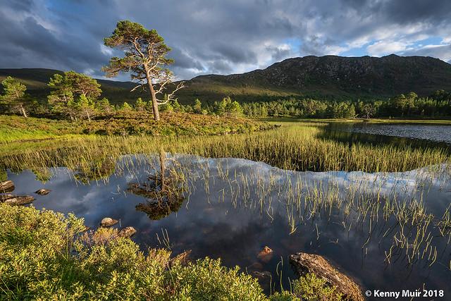 Loch Salach a' Ghiubhais, Glen Affric
