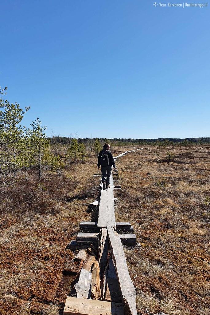 Pitkospuilla kävelijä Torronsuon kansallispuistossa