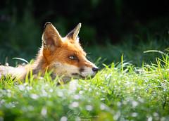 Juni in grass