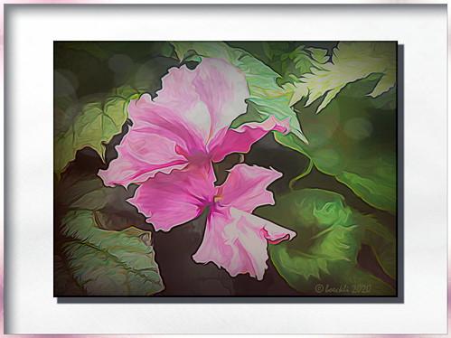 flowers wellington newzealand cyclamen alpenveilchen flower flora fleur pink rosa frame rahmen photoborder nature natur textures texturen texture textur ts2 topaz topazstudio2 painterly abstract 008596