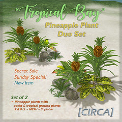 "SSS Event Item | [CIRCA] - ""Tropical Bay"" Pineapple Plant Duo Set"