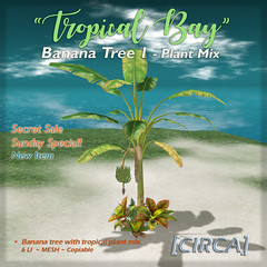 "SSS Event Item | [CIRCA] - ""Tropical Bay"" Banana Tree 1 - Plant Mix"