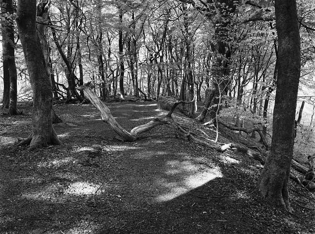 Døde grene i Troldeskoven