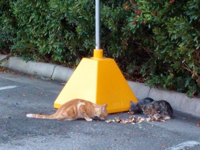 McDonald's Feral Cats